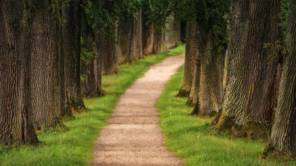 Ein Weg nun einmal ist ein Weg, kein Widerstand ist.