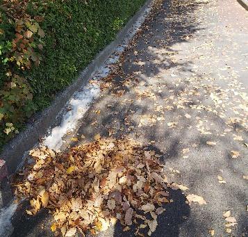 落ち葉掃除 IN南陽地区会館