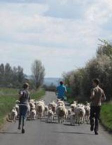 17 Shepherd for a day.jpg