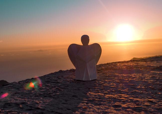 Aniesl anídlek na Madeiře