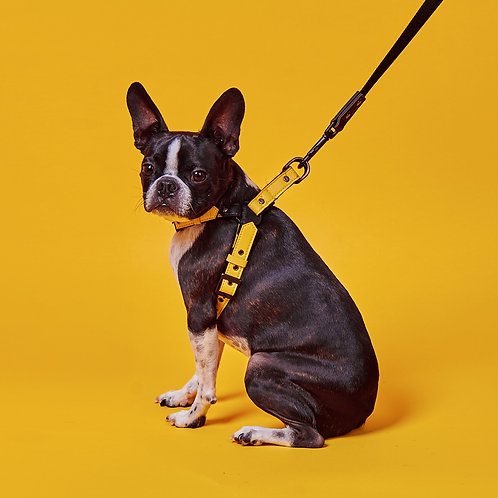 EASY FIT HARNESS° MUSTARD [SAMO ONDOG]