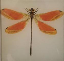 Orange and Yellow Dragonfly B-48