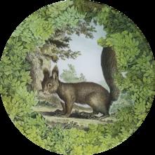 Woodland Squirrel W-23