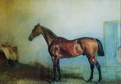 Brown Horse in Stable H-18