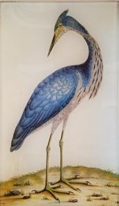 Tall Blue Heron  O-82