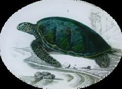 Sea Turtle #2 R-9