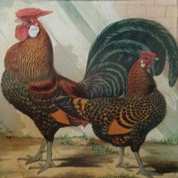 Green and Brown Rooster O-186