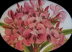 Oleander Close Up FL-281