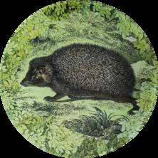 Woodland Hedgehog W-21