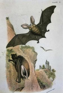 Two Bats with Castle A-353