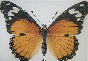 Monarch B-100