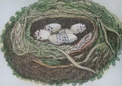 The Sparrow Nest O-152