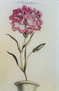 A Carnation 1756 FL-277