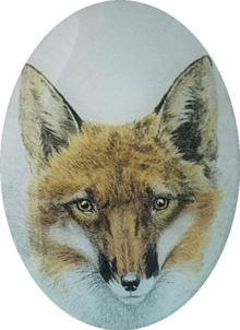 Fox Portrait A-114