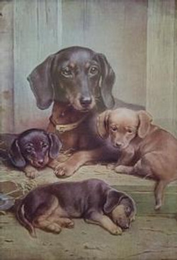 Daschund Family Contact