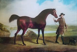 Brown Horse with Man and Small Dog H