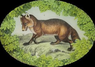 Woodland Fox W-13