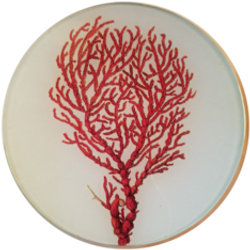 Tall Red Coral  S-173