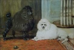 1 Black and 1 White Poodle C-146