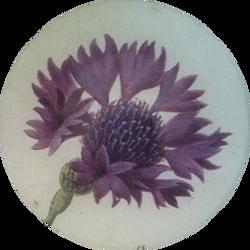 Purple Carnation FL-758