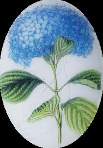 Blue Hydrangea FL-546