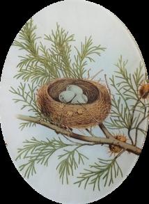 Bunting Nest E-26