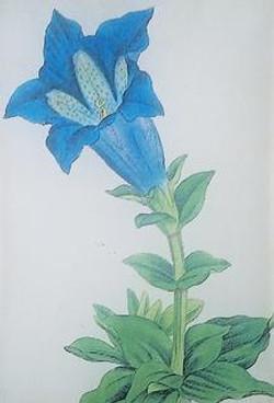 Blue Bell Flower FL-343