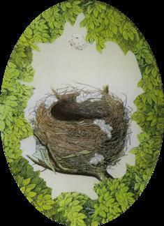 Woodland Nest with White Egg W-17