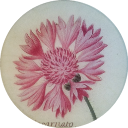 Pink Carnation FL-751