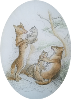 Male and Female Fox with Pups A-118