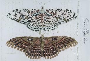 Les Papillions B-46