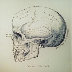 Figure 10 The Skull Mi-209