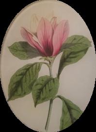 Magnolia FL-296