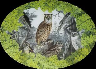 Woodland Owl Study W-11