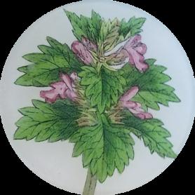 Cut Leaf Netter FL-271