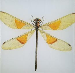 Yellow and Orange Winged   Dragonfly