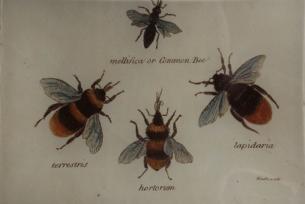 4 Bee Study B-61
