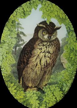 Woodland Horned Owl W-18