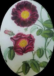 Bertuch Roses FL 315