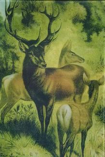 3 Deer A-253