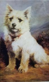 Seated White Highland Terrier C-505
