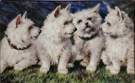 4 White Terriers C-28