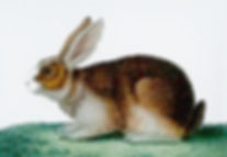 rabbit edited.jpg