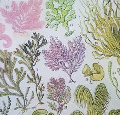 Seaweed Study #33 S-113