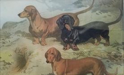 3 Dachshunds C-203