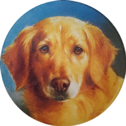 Golden Retriever Face C-24