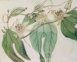 3-Passion Flowers FL-163