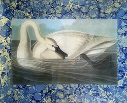 Swan with Butterfly O-180