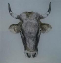 Bullhead #1 A-452