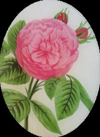 Madame Boll Pink Rose FL-267